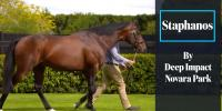 167 SW for Sire of Staphanos